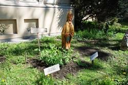 """Археоботаничка башта Музеја Војводине: Страшило """"Пријап"""""""